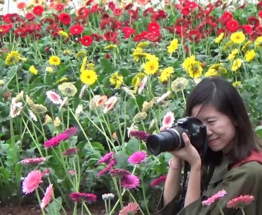 flower-village
