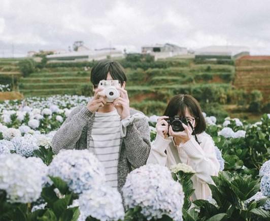 hydrangea-flower-dalat